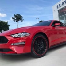 Red Ford Mustang with Red AlloyGators