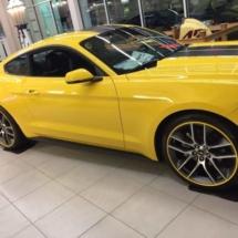 Yellow Dodge with Yellow AlloyGators